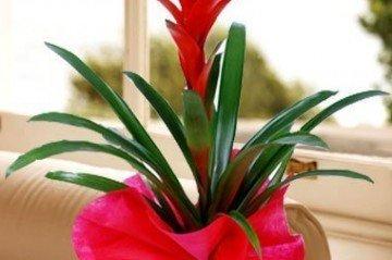 Çiçek Sularken Nelere Dikkat Etmek Gerekir?