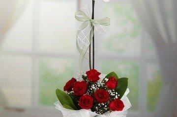 Sevgiliye Hangi Çiçek Gönderilmeli?