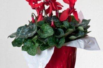 Kütahya Üniversitesi Çiçek Örnekleri