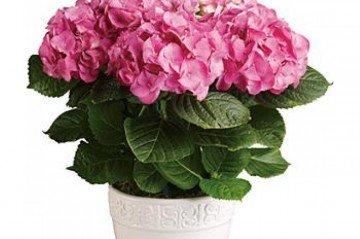 En Önemli 7 Ofis Çiçeği
