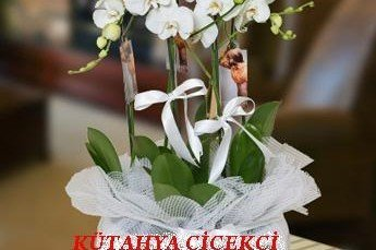 Orkide Çiçeğinin Sulaması Nasıl Yapılır?