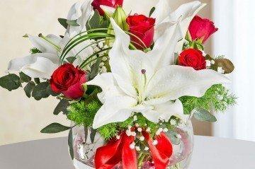 Terfi Çiçeği Kütahya