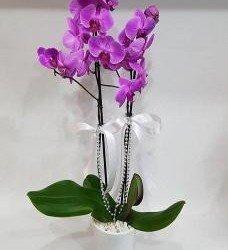 Çift Dal Orkide Renkli