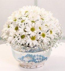 Fanus Beyaz Bahar